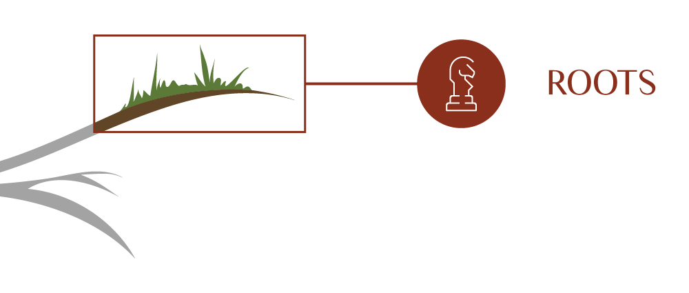 Strategy Roots closeup of the Eureka Process
